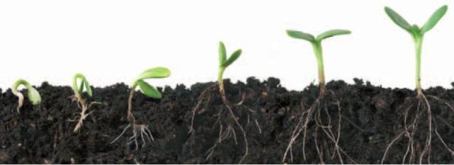 planta germinando